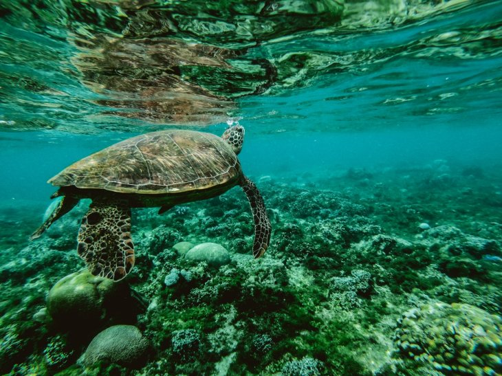 Why coast cities should educate their youth more in marine biology