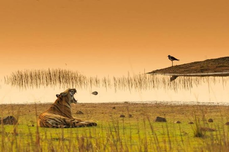 Know About Tadoba National Park