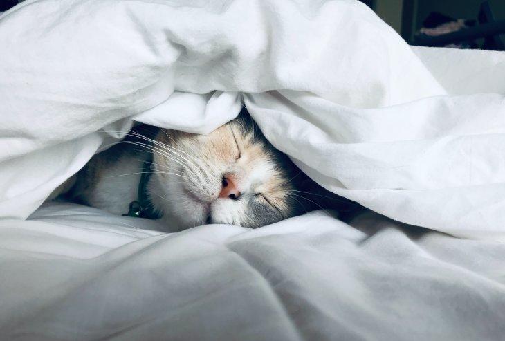 5 Reasons for Having Sleep Troubles
