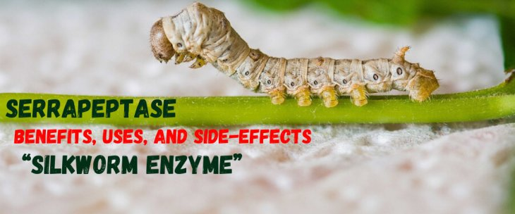 "Serrapeptase Benefits, Uses, and Side-Effects of the ""Silkworm Enzyme"""