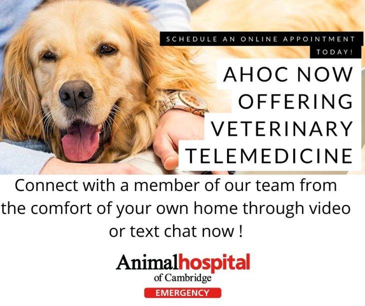 Pet Telemedicine Online