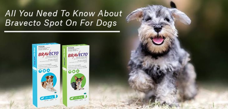 All You Need To Know About Bravecto Spot On For Dogs