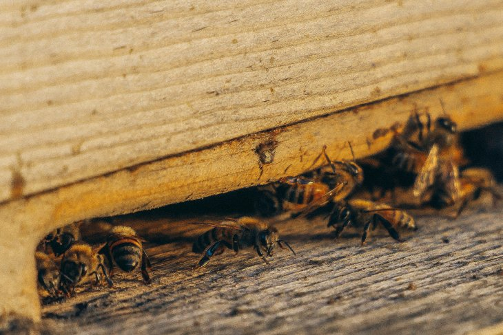 How Reputable is Your Termite Company?