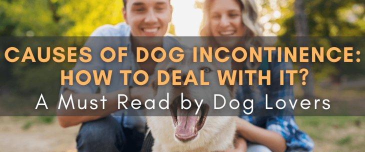 Causes for Dog Incontinence: How To Deal With It? A Must Read by Dog Lovers