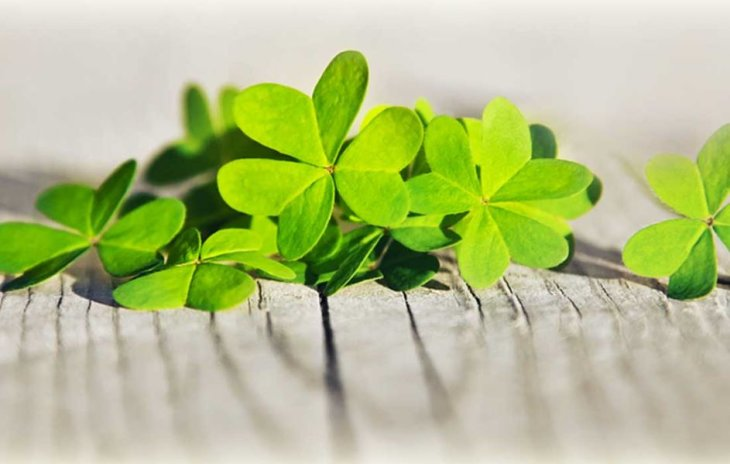 Send a Little Luck This St Patrick's Day with a Lucky Flower Arrangement!