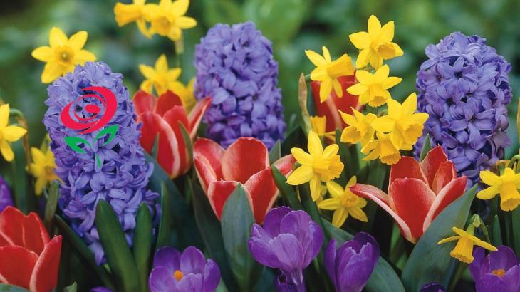 Brant Florist Loves Spring Flowers