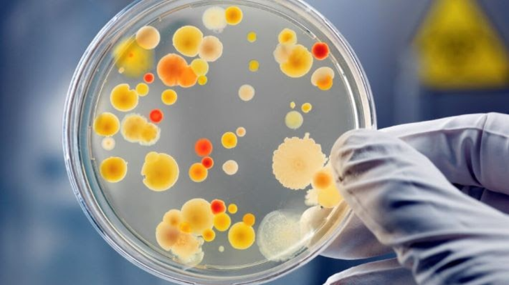 What places harbor the most bacteria in your house?