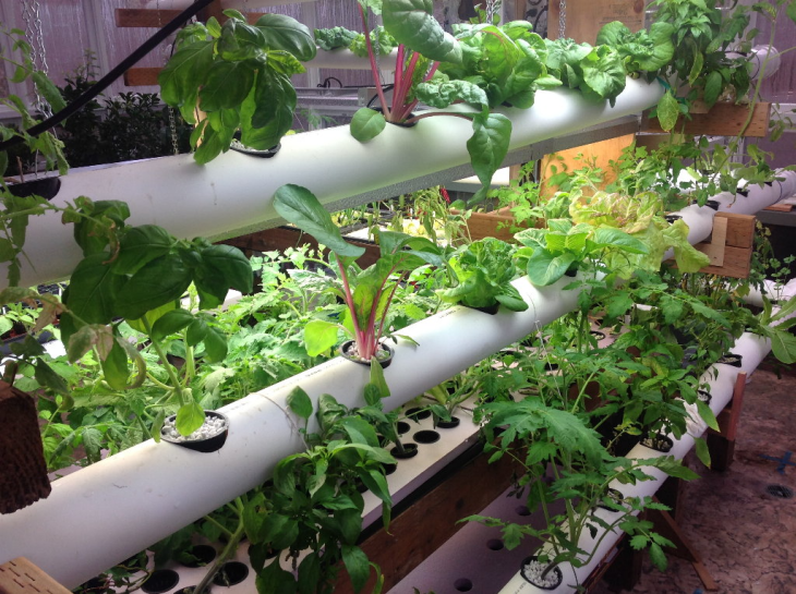 Why Should You Opt for Hydroponic Vegetables from Online Store?