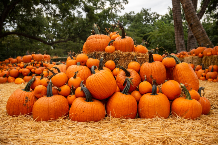 October Events in Burlington and Surrounding Areas