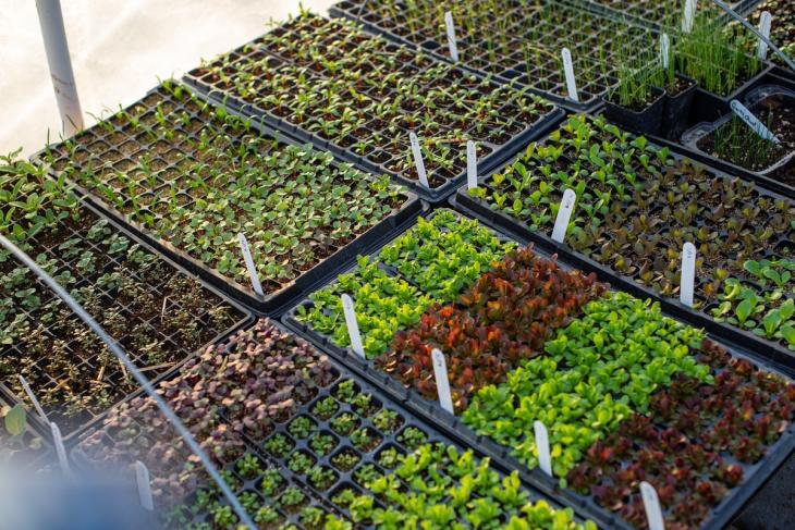 Thomas Salzano: Tips, Tricks, and Advice for Your Organic Garden