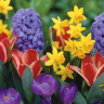 Spring is here and it's time to plant some new flowers and fill our homes with beautiful colours that we haven't seen in a while.