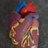 Heart disease is a silent killer and very common among the elder population. Here are 5 surprising causes of heart disease and how to prevent it.