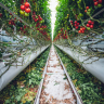 According to Brent Emerson Horticulture is agriculture of the food, materials and decoration. People don't how much fresh veggie or fruits are.
