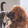 If you're selling your house, or planning to, and you have pets, these 4 tips will help make sure your furry family doesn't affect your sale price.
