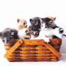 Cats have adorable traits such as the way they care for themselves, how they manage to stay clean, and the cute antics that make them a wonderful family pet.