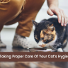 Taking proper care of your cat's hygiene is very important and we will be talking about this in more detail. So keep reading on, cat parents!