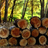 Are you planning to purchase firewood? Whether you want it for a backyard fire pit, wood stove, or fireplace.