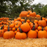 Fall, pumpkins, art festivals, so many outdoor activities for the whole family to enjoy this October.