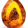 This week we are looking at the benefits and uses for:  Amber