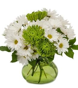 St. Patrick's Day Daisies By Brant Florist