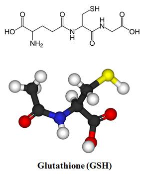 glutathione, antioxidant, cells