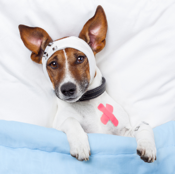 Veterinary Health Care Animal Hospital of Cambridge Ontario