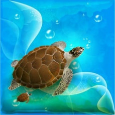 Turtle, Imagination, NLP,