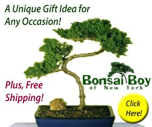 Bonsai Boy, Bonsai tree, gift idea, tiny homes