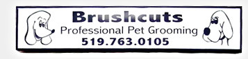 Pet Health In Guelph Region