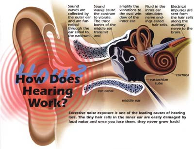how does hearing work, audiology, hearing, inner ear, middle ear