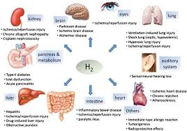 H2 Benefits; Kidney; Brain; Eyes; Lung; Auditory System; Heart; Intestine: Liver; Pancreas; Metabolism