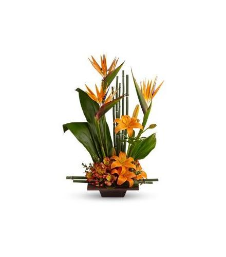 Brant Florist, Burlington, Tropical Flowers