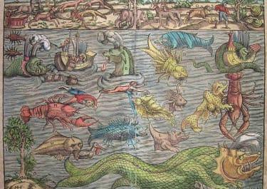 SEA MONSTERS MUNSTER'S SEA MONSTERS