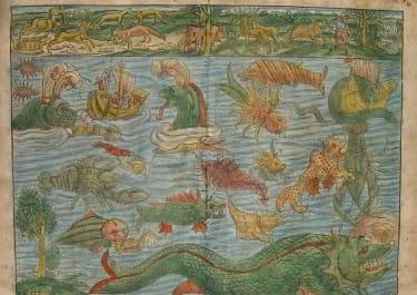 MUNSTERS SEA MONSTERS