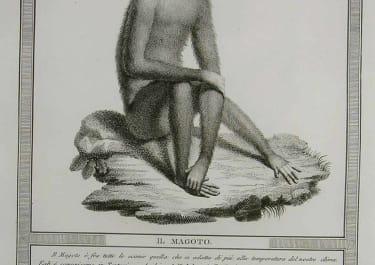 MONKEYS IL MAGOTO