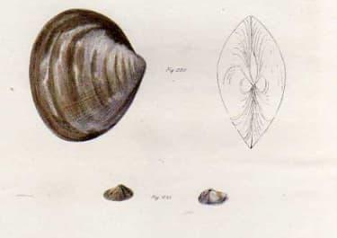 SHELLS NATURAL HISTORY OF NEW YORK PLATE 23