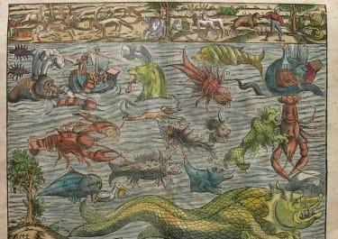 MUNSTER'S SEA MONSTERS