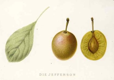 PLUM DIE JEFFERSON