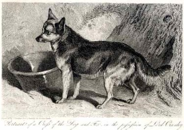 DOGS PORTRAIT OF A DOG AND A FOX IN THE POSSESSION OF LORD CRANLEY