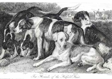THE HOUNDS OF THE HATFIELD HUNT