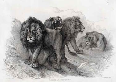 LIONS AFTER RUBENS II