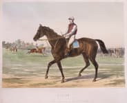 EXCEPTIONAL  ..STUNNING LITHOGRAPH OF THE RACE HORSE 'ALBION' RARE BY JOURDAN & BARBOT