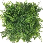 Maidenhair 1x1 m
