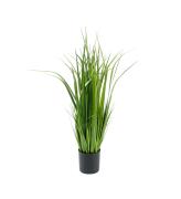 Gress, 80 cm
