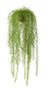 Hoya 75 cm