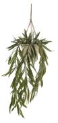Rhipsalis 75 cm