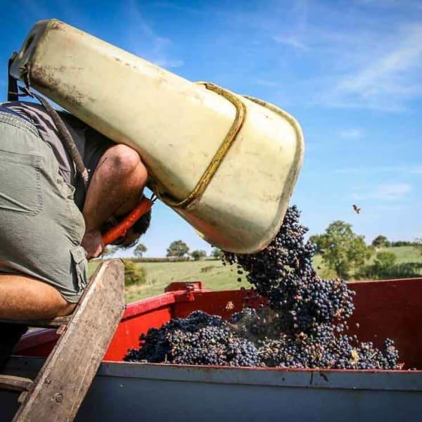 vignoble d'entreprise Corporate photo de château pendant les vendanges en Bourgogne à Bordeaux Aquitaine Gironde formation photo et graphisme