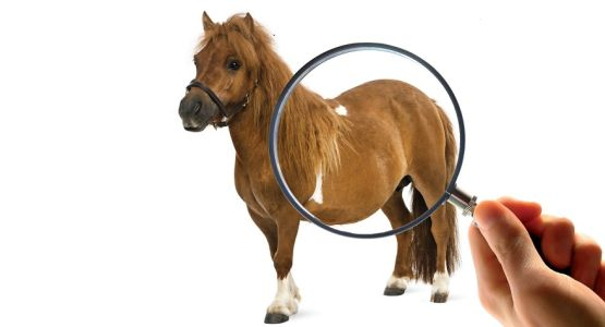 paard ppid detective vegrootglas