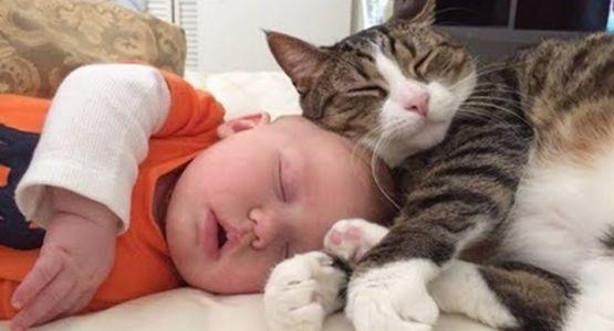 slapende baby met kat