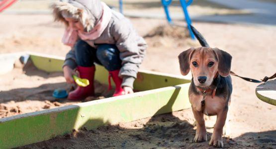 kind en hond bij zandbak